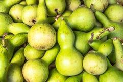 Lodisar för squash för siceraria för mat för lagenaria för kalebasskalebassflaska växande Arkivbilder