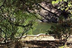 Lodjur sjö, Bradshaw kommandosoldatområde, Prescott National Forest, tillstånd av Arizona, Förenta staterna Royaltyfri Bild