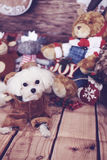 Lodlinje för maltese hund för ferie Royaltyfria Foton