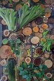 Lodlinje som arbeta i trädgården i parkera Fotografering för Bildbyråer