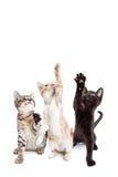 Lodlinjebaner för tre skämtsamt kattungar Arkivfoton