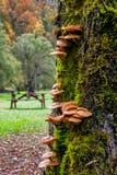 Lodlinjen plocka svamp på den gröna stammen Royaltyfria Foton