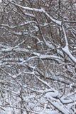 Lodlinjeskott av trädstammar under snön Arkivbild
