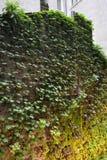 Lodlinjeträdgård - grön vägg Arkivbild