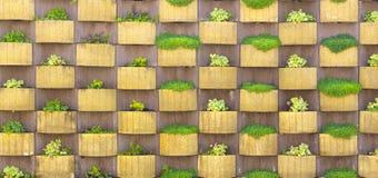 lodlinjeträdgården planterade med suckulenter en stads- uppehällegräsplanvägg Royaltyfri Bild
