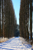 Lodlinjevintern landskap Arkivbilder
