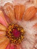 Lodowa abstrakcja z zamarzniętym kwiatem Obrazy Stock