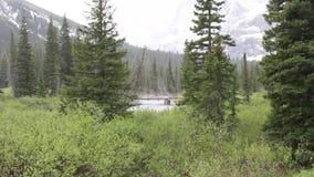 lodowa Montana park narodowy zbiory