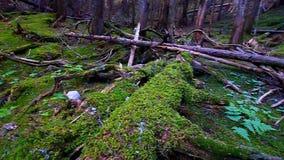 Lodowa parka narodowego las zbiory wideo