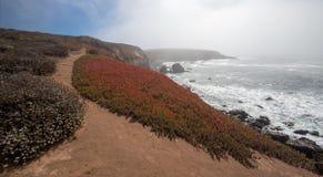 Lodowa roślina na blefu śladzie na niewygładzonej Środkowej Kalifornia linii brzegowej przy Cambria Kalifornia usa obrazy royalty free