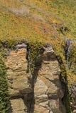lodowa roślina na linii brzegowych skałach Obraz Stock