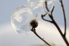 lodowa roślina fotografia stock