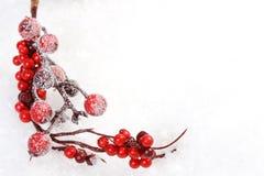 Lodowacenie sosny gałąź i gałąź z czerwonymi rowanberries i prezenta pudełko z płatkami śniegu, choinki, reindeerw i czerwony mat Fotografia Stock