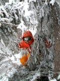 lodowata narciarki drzew kobieta Zdjęcie Stock