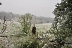 lodowaty poranek fotografia stock