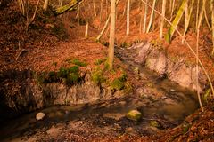 Lodowaty strumień przez bukowego lasu zdjęcia royalty free