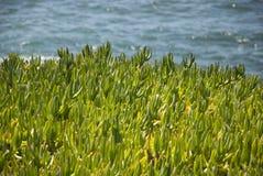 Lodowe rośliny Zdjęcia Stock