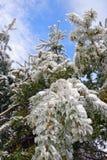 lodowi drzewa Fotografia Stock