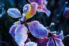 Lodowi kryształy na liściach - Zamyka w górę fotografii malutcy lodowi kryształy na liściach Selekcyjna ostrość na środkowej częś obraz stock