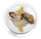 lodowi shellfish zdjęcie royalty free