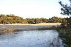 Lodowy basen w lesie Obraz Stock