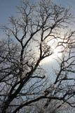 Lodowy drzewo Zdjęcia Royalty Free