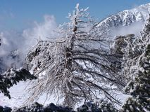 Lodowy drzewo Zdjęcie Stock