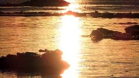 Lodowy floe unosi się w wodzie, czerepy lód na rzece w wiośnie, lodu dryf zdjęcie wideo