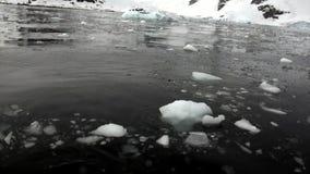Lodowy floe w oceanie Antarctica zbiory wideo