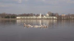 Lodowy floe z seagulls unosi się, Kwietnia dzień Wiosna w Veliky Novgorod, Rosja zbiory
