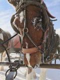 Lodowy koń Zdjęcia Stock