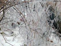 Lodowy obwieszenie na gałąź drzewa fotografia stock