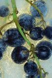 lodowy wino Zdjęcie Stock