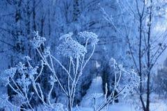 Lodowy zima cud w Rosja, przychodził mrozy, białych niż biel, Nizhny Novgorod region, bajecznie kwiaty zdjęcie stock
