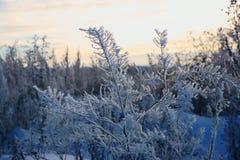 Lodowy zima cud w Rosja, przychodził mrozy, białych niż biel, Nizhny Novgorod region, bajecznie kwiaty zdjęcie royalty free