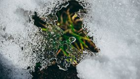 Lodowych kryształów zbliżenie z trawą obraz royalty free