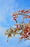 Lody glazurujący drzewa po zimy burzy Zdjęcia Royalty Free