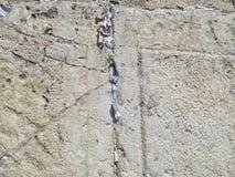 Loeiende muur Jeruzalem Royalty-vrije Stock Afbeeldingen