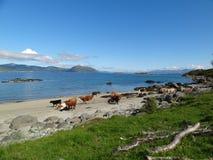 Lofoten öar, Norge Det norska havet Arkivbilder
