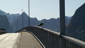 Lofoten Brücke Lizenzfreie Stockfotos