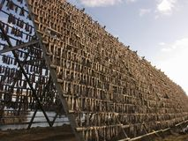 Lofoten fish racks. Traditional Lofoten racks to hang the fish to get dry stock image
