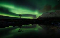 Lofoten fjord, Norge Arkivbilder