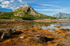 Lofoten-Inseln Stockbilder