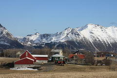Lofoten's Farm  of Leknes Stock Images