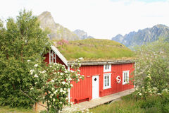 Lofoten's lodge with grass on the roof Royalty Free Stock Photography