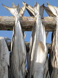 Lofoten stockfish drying Stock Image