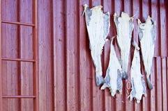 Lofoten - stockfish sulla parete esterna fotografia stock