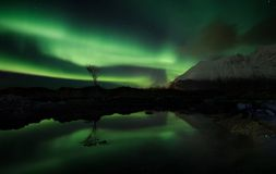 Lofotenfjord, Noorwegen Stock Afbeeldingen
