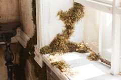 Loft design window sill and brick wall covered with moss.  Stock Image