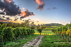 Lofty clouds over the vineyards Royalty Free Stock Photography